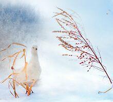 Snowstorm by natans