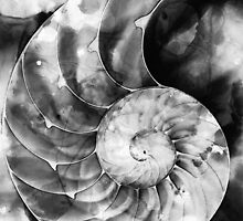 Black And White Nautilus Shell By Sharon Cummings by Sharon Cummings