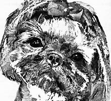 Shih Tzu Dog Art In Black And White by Sharon Cummings by Sharon Cummings