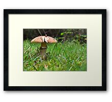 Mushroom on the Grass Framed Print