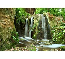 Forest Green Photographic Print