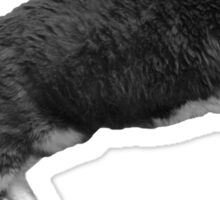 Aw, Kitty Sticker