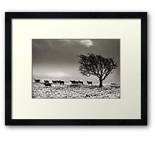 In search of food... Framed Print