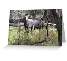 Framed in the timber-- two wild colts. Greeting Card