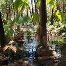 Zebedee Springs in  El Questro by georgieboy98