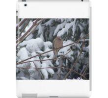 Sleeping Mourning Dove in Winter iPad Case/Skin