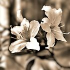 Colourless Beauty-Flower by Alex  Jeffery