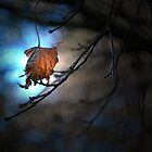 One Leaf left on the Tree by Alex  Jeffery