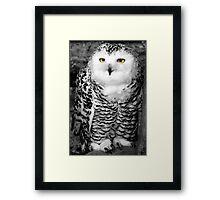 Snowy Owl - Largs Scotland Framed Print