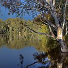 Murray River #3 | Echuca | Victoria by Bill Fonseca