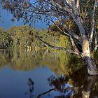 Murray River #3 | Echuca | Victoria by Bill Fonseca