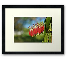 Beautiful Red Flowers-Yellow Waters Framed Print