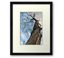 Beautiful Tree Rising Above the Ground Framed Print