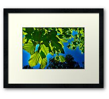 Bright Green Leaves against a Blue Backdrop Framed Print