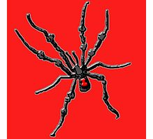 Big Creepy Black Widow Spider Photographic Print