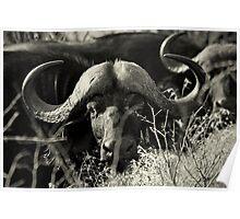 THE REBEL - Kruger National Park Poster