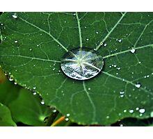 Natures Jewels Photographic Print