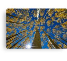 Aspen Canopy - Big Cottonwood Canyon Canvas Print