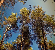 Tree Tops. by Aj Finan