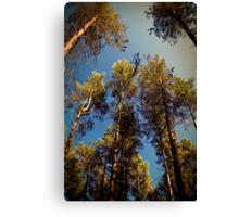 Tree Tops. Canvas Print