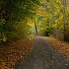 Back Road All to Myself by marilynwood
