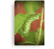 Tomato Worm and Baby Canvas Print