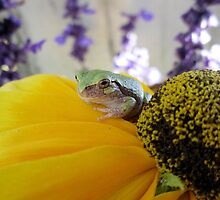 Tree Frog Flower Series 3 of 6 by Barberelli