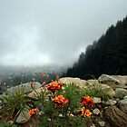 Flowers and the Valley! by Vivek Bakshi