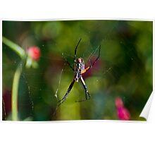 Banana Spider and His Web Poster