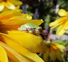 Tree Frog Flower Series 2 of 6 by Barberelli