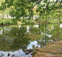 Early Fall Reflections by Judi FitzPatrick