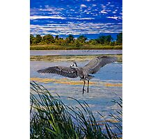 Jamaica Bay Wild Life Refuge, New York Photographic Print