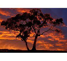 Lone Tree Silhouette Photographic Print