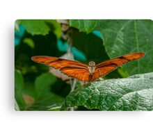Julia Heliconian butterfly, (Dryas Iulia), Canvas Print