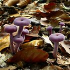 Little Pink Fungi by ienemien