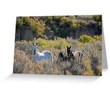The Lame Grey Mare...  Greeting Card