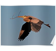 032110 Great Blue Heron Poster