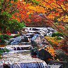 Enjoy Fall ... by Juergen Weiss