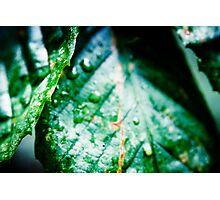Natures Sweat Photographic Print