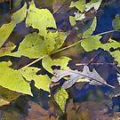 on my path 2 by Diane Trummer Sullivan