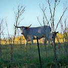 Long Horn Cow by Diane Trummer Sullivan