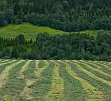 Memorable green & green moments . Norway.Brown Sugar. by © Andrzej Goszcz,M.D. Ph.D