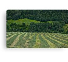 Memorable green & green moments . Norway.Brown Sugar. Canvas Print