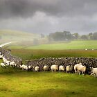 Sheltering from the storm by Alan Mattison