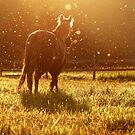 6.8.2015: Horse and Flying Insects by Petri Volanen