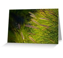 Fountain Grass, Pennisetum alopecuroides, in bloom Greeting Card