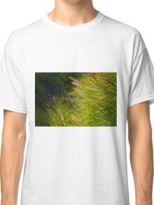 Fountain Grass, Pennisetum alopecuroides, in bloom Classic T-Shirt