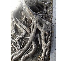 Decided 2 grow up, set roots down Photographic Print