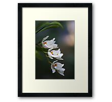 native orchids Framed Print