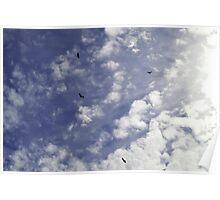 Circle of Buzzards Poster